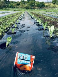 卒業おめでとう‼️ - 富士のふもとの農業日誌