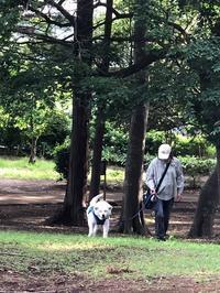 アポキルとステロイド - 秋田犬「大和と飛鳥丸」の日々Ⅱ