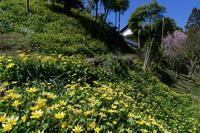 春色の小道 - katsuのヘタッピ風景
