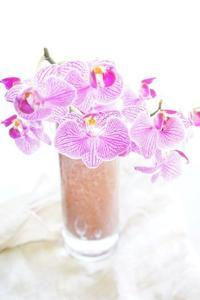 6月レッスン日程とSP価格のお知らせ - お花に囲まれて