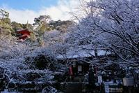 今熊野観音寺 - Deep Season