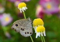 庭の昆虫 - ひな日記