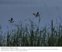 2020.5.27(1) - 鳥撮り遊び