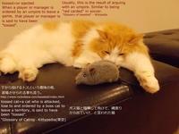 三島由紀夫『夜告げ鳥』 - ネコと文学と猫ブンガク