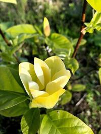 日日庵、花、花・・ - 『文化』を勝手に語る