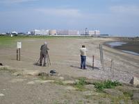 西なぎさにコアジサシの保護区ができました! - 東京いきもの雑記帳