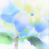 🌻・AJISAI: - 花々の記憶  happy momo