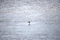 有明海の干潟 - Photograph & My Super CUB110 【しゃしんとスクーター】