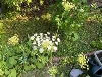 レッスンと庭と - わたしの好きな物