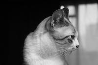 猫の気持 - ぎんネコ☆はうす