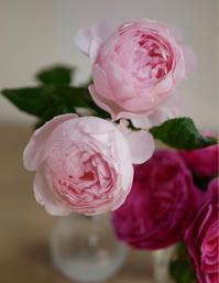 また薔薇を挿し木に。 - 春&ナナと庭の薔薇