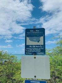 ハワイ島のkiholo bayへ!! - Takako's Diary