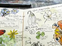 森林のワイルドフラワー:ロックダウン日記 - ブルーベルの森-ブログ-英国のハンドメイド陶器と雑貨の通販