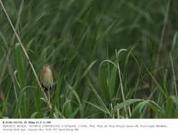 2020.5.27(2) - 鳥撮り遊び