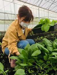 収穫の極意‼️ - 富士のふもとの農業日誌