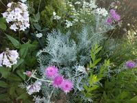 庭巡回 - natural garden~ shueの庭いじりと日々の覚書き