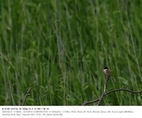 2020.5.27(3) - 鳥撮り遊び