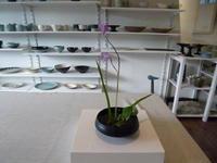 紫蘭と水盤と池波正太郎 - サンカクバシ 土と私の日記