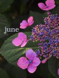 6月のお休み - 愛媛県新居浜市  from KotoRi
