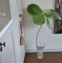 花を買ったり植え替えしたり♪退屈なコロナ日記36,37日目 - ルソイの半バックパッカー旅