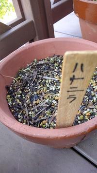 ベランダの花たち - ウィズ(ゼロ)コロナのうちの庭の備忘録~Green's Garden~