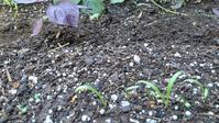 トマトの手入れ - ウィズコロナのうちの庭の備忘録~Green's Garden~