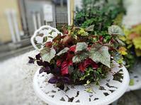 レックスベゴニアの寄せ植え - 小庭の園芸日記