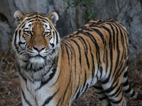 2007年の天王寺動物園 - 動物園放浪記
