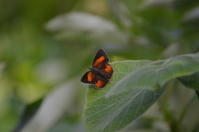 ウラギンシジミ他5月29日 - 超蝶