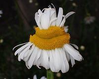 週末散歩で、見つけた植物と昆虫 - 自然の写真帖