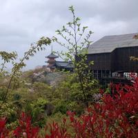 雨の清水寺  ☂ @京都 - FK's Blog