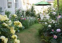 Garden Storyさんにて「実録!バラがメインの庭づくり第5話」がアップ頂きました。~講座開講のお知らせ - バラとハーブのある暮らし Salon de Roses