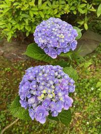 庭は花盛り - わたしの好きな物