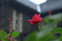 本日、旧古河庭園が再開。5が月ぶりに訪問です。 - meの写真はザンス