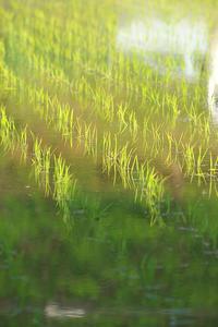 散歩の収穫#4 - 但馬・写真日和