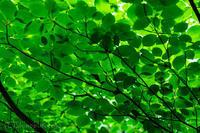 緑の癒し - 撃沈風景写真