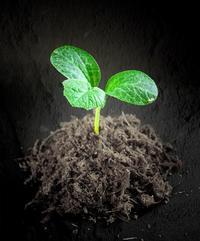 心に植える「種」 - その人がその人らしく生きること ~黒魔女EMIKOのスピリチュアルLesson