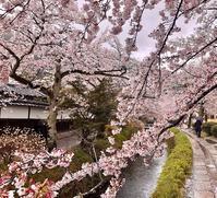 哲学の道を歩いて南禅寺へ@京都 - FK's Blog