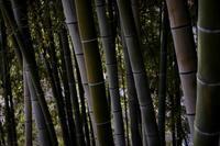 竹の成長 - フォトな日々