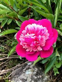 庭に咲く花 - 自然の中でⅡ
