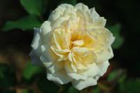 レムリア・地上天国の復活と創造3 - 命と涙と愛と笑いと