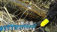 シトリンを食べる海部郡の雷魚 Japanese Snakehead fishing - 或岩松枝諏の一服