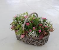 ニチニチソウ夏花火の籠ギャザリング - ヒバリのつぶやき