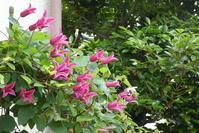 旧宅だより / ピンクの花々 - そらいろのパレット