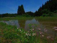 初夏の富山平野 - 飛騨山脈の自然
