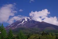 富士山麓散策 - 山の花、町の花