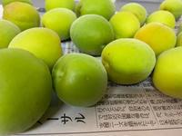 ウメ〜シュ - ティダぬファの雑記帳
