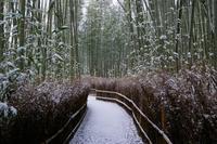 竹林の小径 - Deep Season