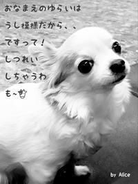も~🐄 - ワンワンワン物語