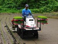 米作りの挑戦(2020)田植え今年は昨年よりもさらに10日早い田植えです!(前編) - FLCパートナーズストア